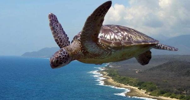 flying turtle Ibiza Gathering early bird packages on sale